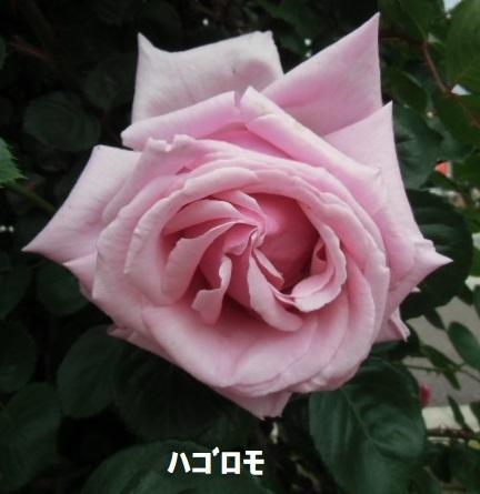 e0114588_14221829.jpg