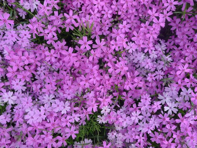 風薫る/ A little of sweet scent in the wind._e0120899_10570464.jpg