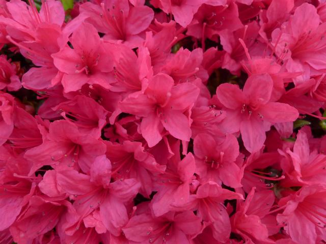 風薫る/ A little of sweet scent in the wind._e0120899_10574375.jpg