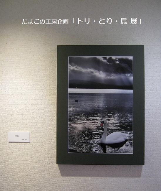 たまごの工房企画「トリ・とり・鳥 展」 その10_e0134502_17192243.jpg