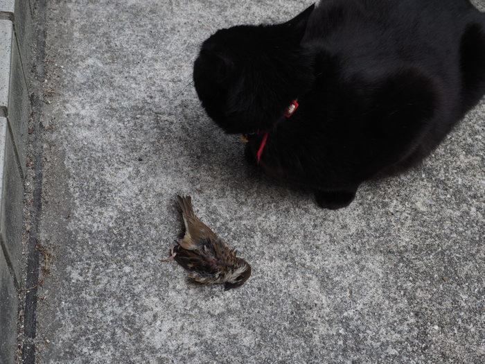 スズメを捕った、くうちゃん_c0116915_22481692.jpg