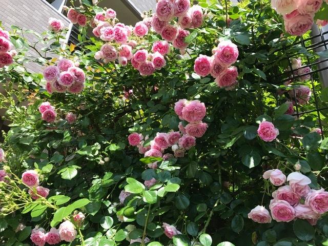 薔薇のお茶会~目覚めへ向かって~_d0085018_22355457.jpg