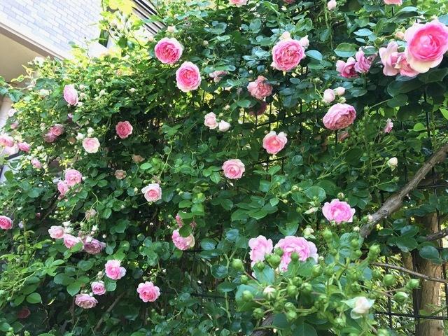 アユーラローズ*薔薇の花のお茶会*_d0085018_23593962.jpg