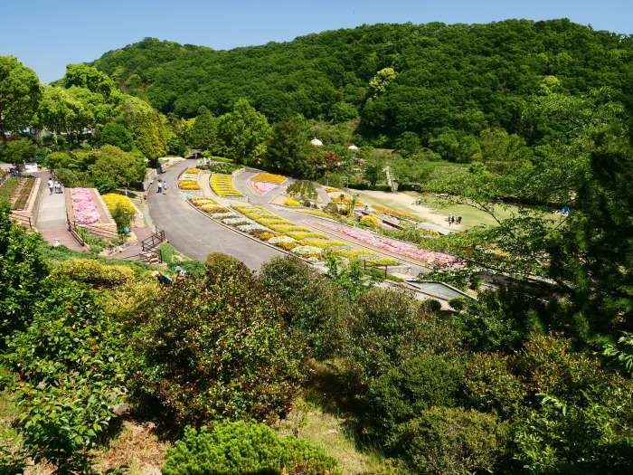 和歌山県植物公園緑花センター  2019-05-30 00:00   _b0093754_20373727.jpg