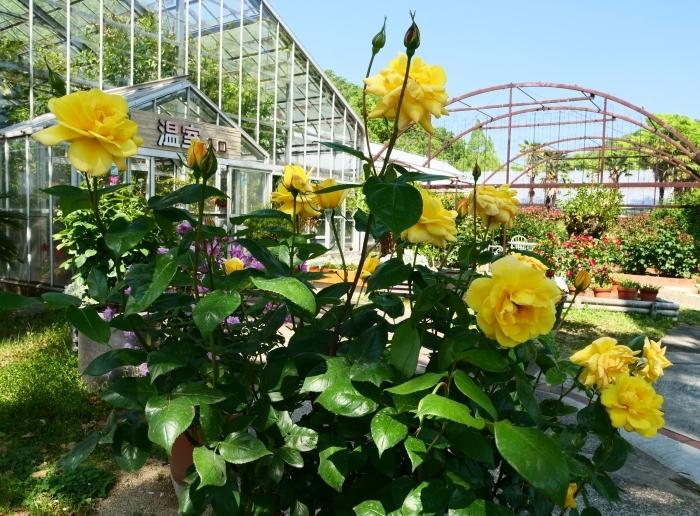 和歌山県植物公園緑花センター  2019-05-30 00:00   _b0093754_20381092.jpg