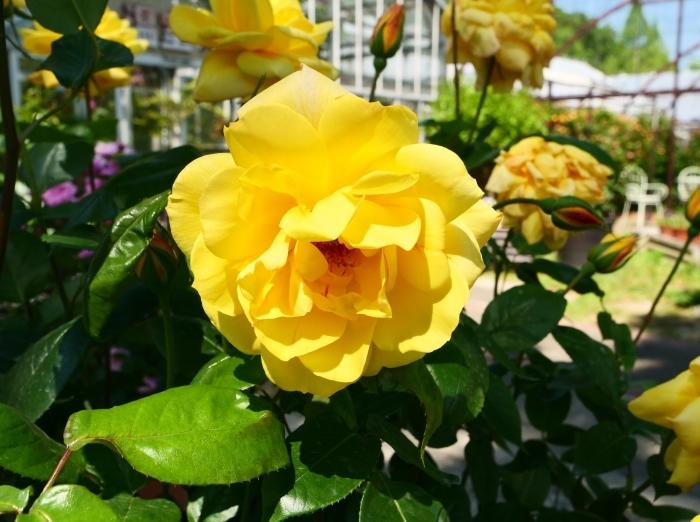 和歌山県植物公園緑花センター  2019-05-30 00:00   _b0093754_20382308.jpg