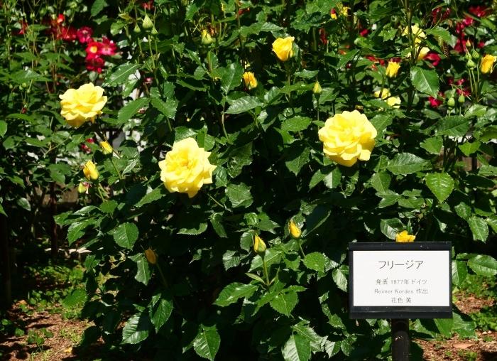 和歌山県植物公園緑花センター  2019-05-30 00:00   _b0093754_20383351.jpg