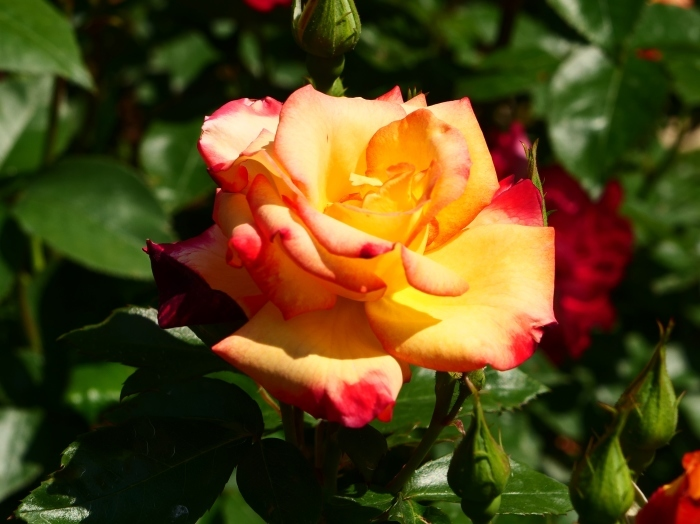 和歌山県植物公園緑花センター  2019-05-30 00:00   _b0093754_20391981.jpg