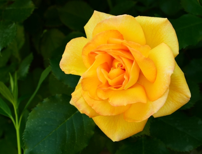和歌山県植物公園緑花センター  2019-05-30 00:00   _b0093754_20394674.jpg