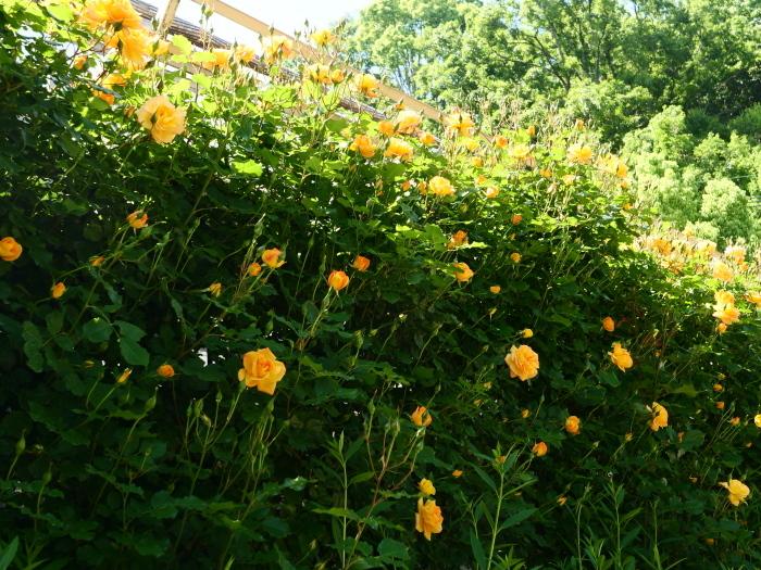 和歌山県植物公園緑花センター  2019-05-30 00:00   _b0093754_20400716.jpg