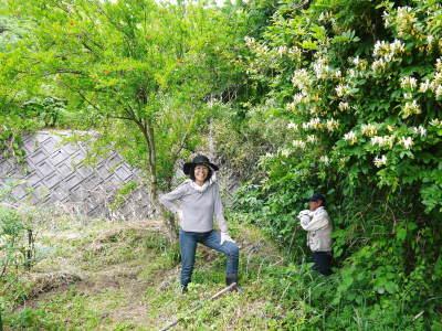 無農薬フレッシュブルーベリー 花から着果、そして色づきへ!おしどり夫婦は仲良く個展を開催しました!_a0254656_17341647.jpg