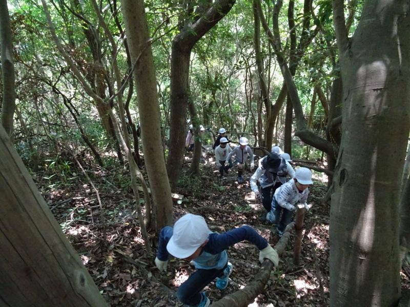 和歌山市立楠見西小学校:3・4年生遠足「うみべの森探検」_c0108460_16295213.jpg