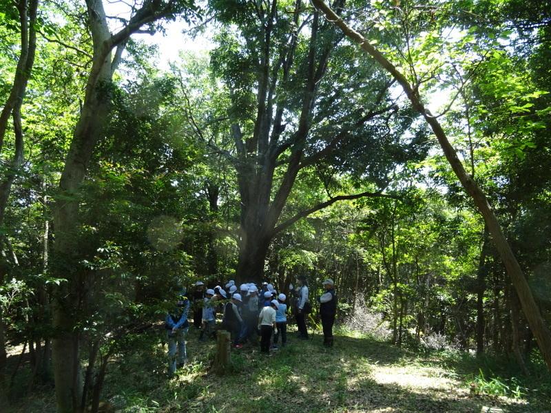 和歌山市立楠見西小学校:3・4年生遠足「うみべの森探検」_c0108460_16305268.jpg