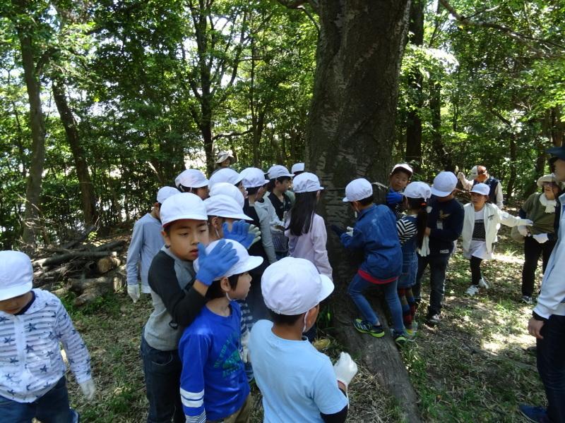 和歌山市立楠見西小学校:3・4年生遠足「うみべの森探検」_c0108460_16305415.jpg