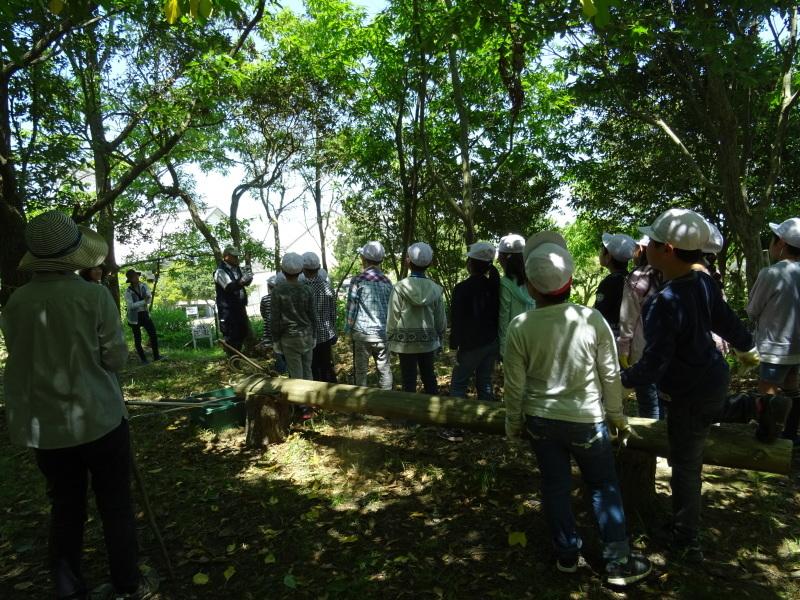和歌山市立楠見西小学校:3・4年生遠足「うみべの森探検」_c0108460_16341566.jpg