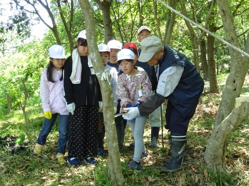 和歌山市立楠見西小学校:3・4年生遠足「うみべの森探検」_c0108460_16352736.jpg