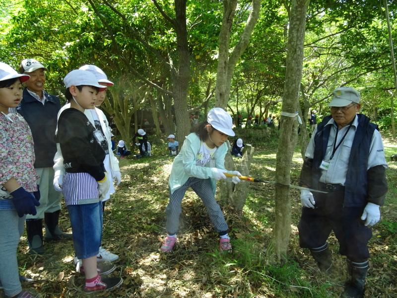 和歌山市立楠見西小学校:3・4年生遠足「うみべの森探検」_c0108460_16352802.jpg