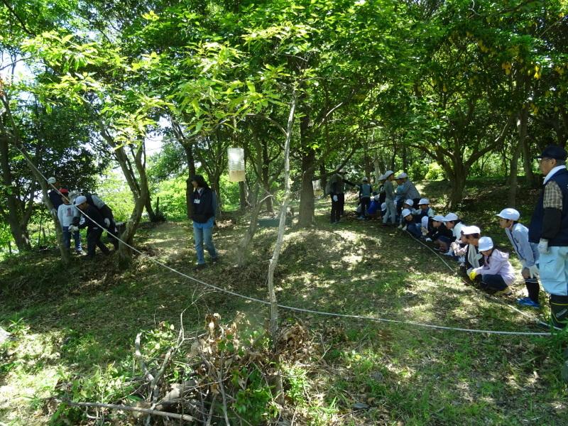 和歌山市立楠見西小学校:3・4年生遠足「うみべの森探検」_c0108460_16361259.jpg