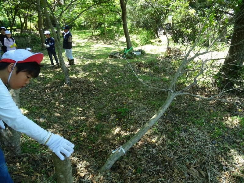 和歌山市立楠見西小学校:3・4年生遠足「うみべの森探検」_c0108460_16361335.jpg
