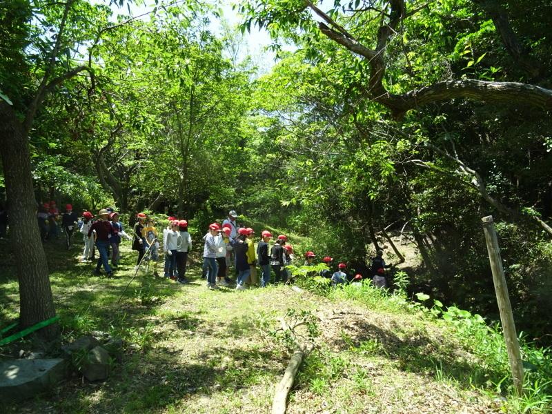 和歌山市立楠見西小学校:3・4年生遠足「うみべの森探検」_c0108460_16401951.jpg