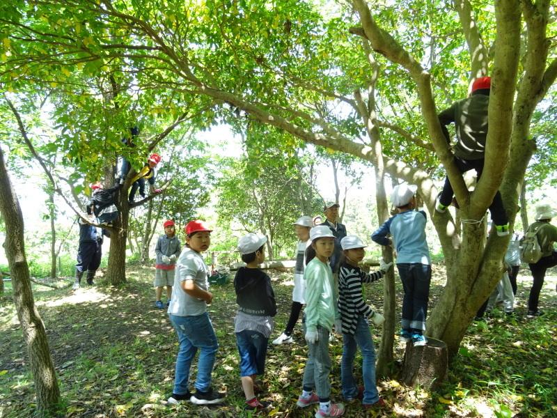 和歌山市立楠見西小学校:3・4年生遠足「うみべの森探検」_c0108460_16424272.jpg