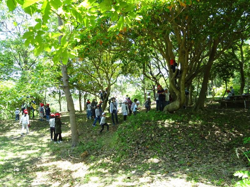 和歌山市立楠見西小学校:3・4年生遠足「うみべの森探検」_c0108460_16424351.jpg