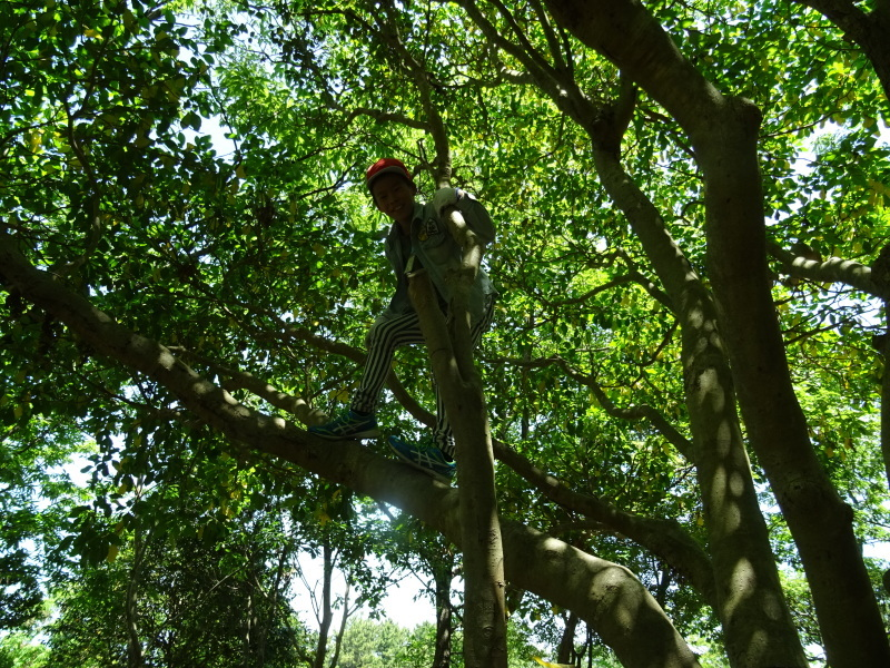 和歌山市立楠見西小学校:3・4年生遠足「うみべの森探検」_c0108460_16441613.jpg