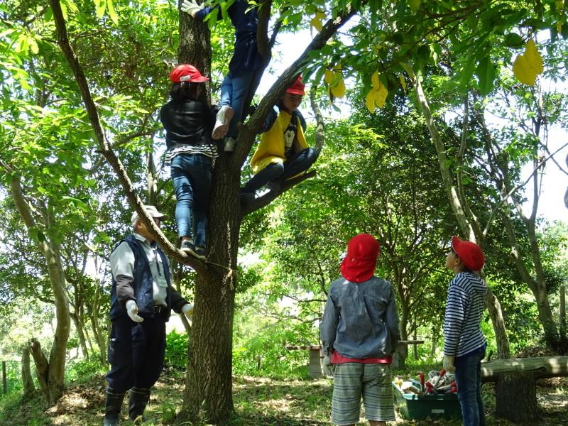 和歌山市立楠見西小学校:3・4年生遠足「うみべの森探検」_c0108460_16441722.jpg