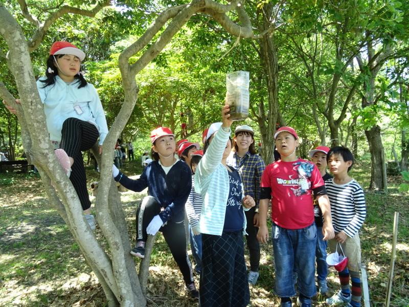 和歌山市立楠見西小学校:3・4年生遠足「うみべの森探検」_c0108460_16471667.jpg
