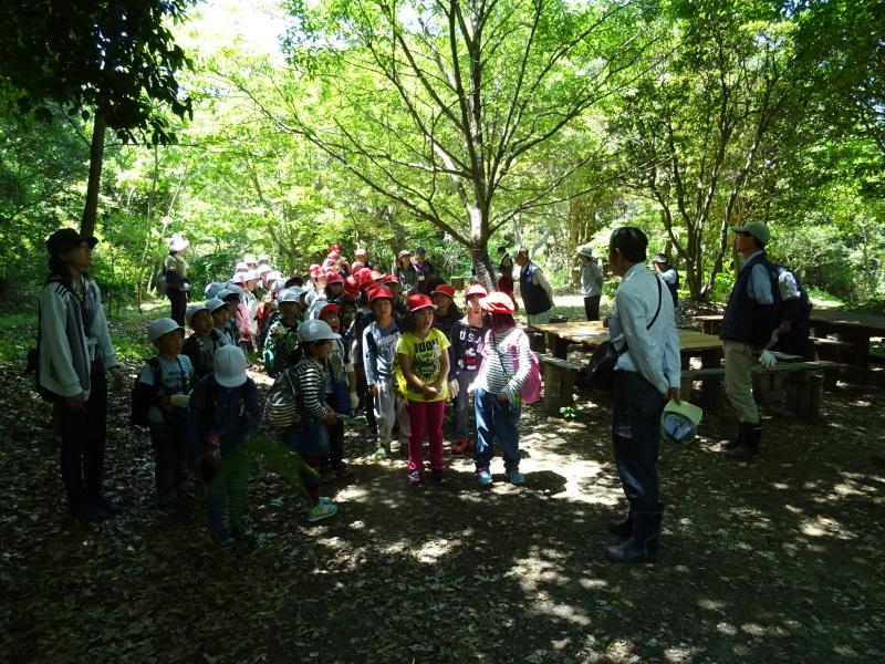 和歌山市立楠見西小学校:3・4年生遠足「うみべの森探検」_c0108460_16481938.jpg