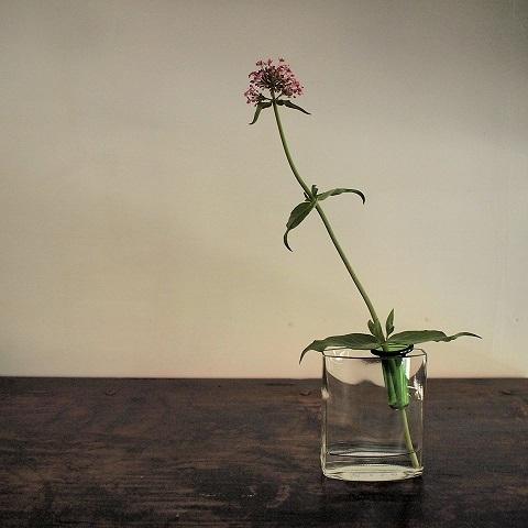 お花屋さん気分で_b0322280_18302234.jpg