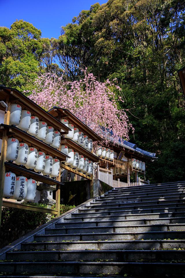桜 2019!  ~六所神社~_b0128581_21025907.jpg