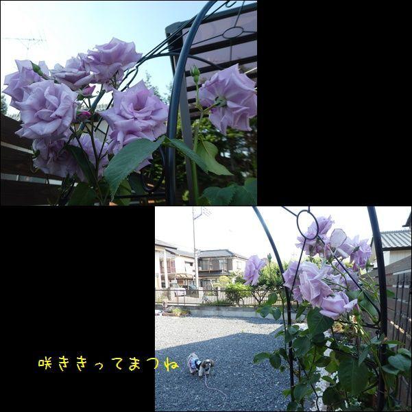 e0234881_21400096.jpg