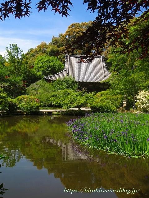 奈良 長岳寺の杜若_f0374092_21163429.jpg