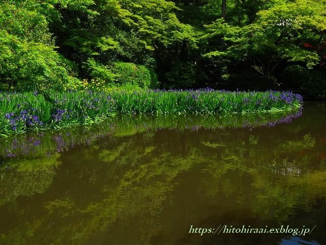 奈良 長岳寺の杜若_f0374092_21173535.jpg