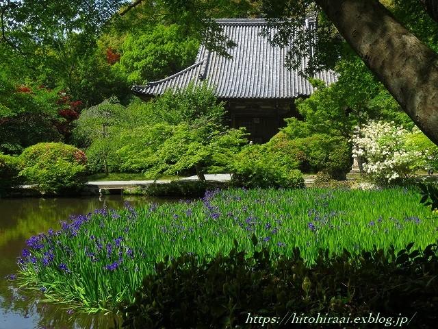 奈良 長岳寺の杜若_f0374092_21180099.jpg
