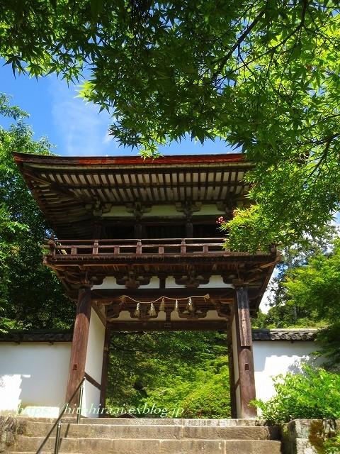 奈良 長岳寺の杜若_f0374092_21192210.jpg