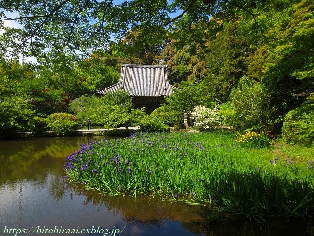 奈良 長岳寺の杜若_f0374092_21371228.jpg