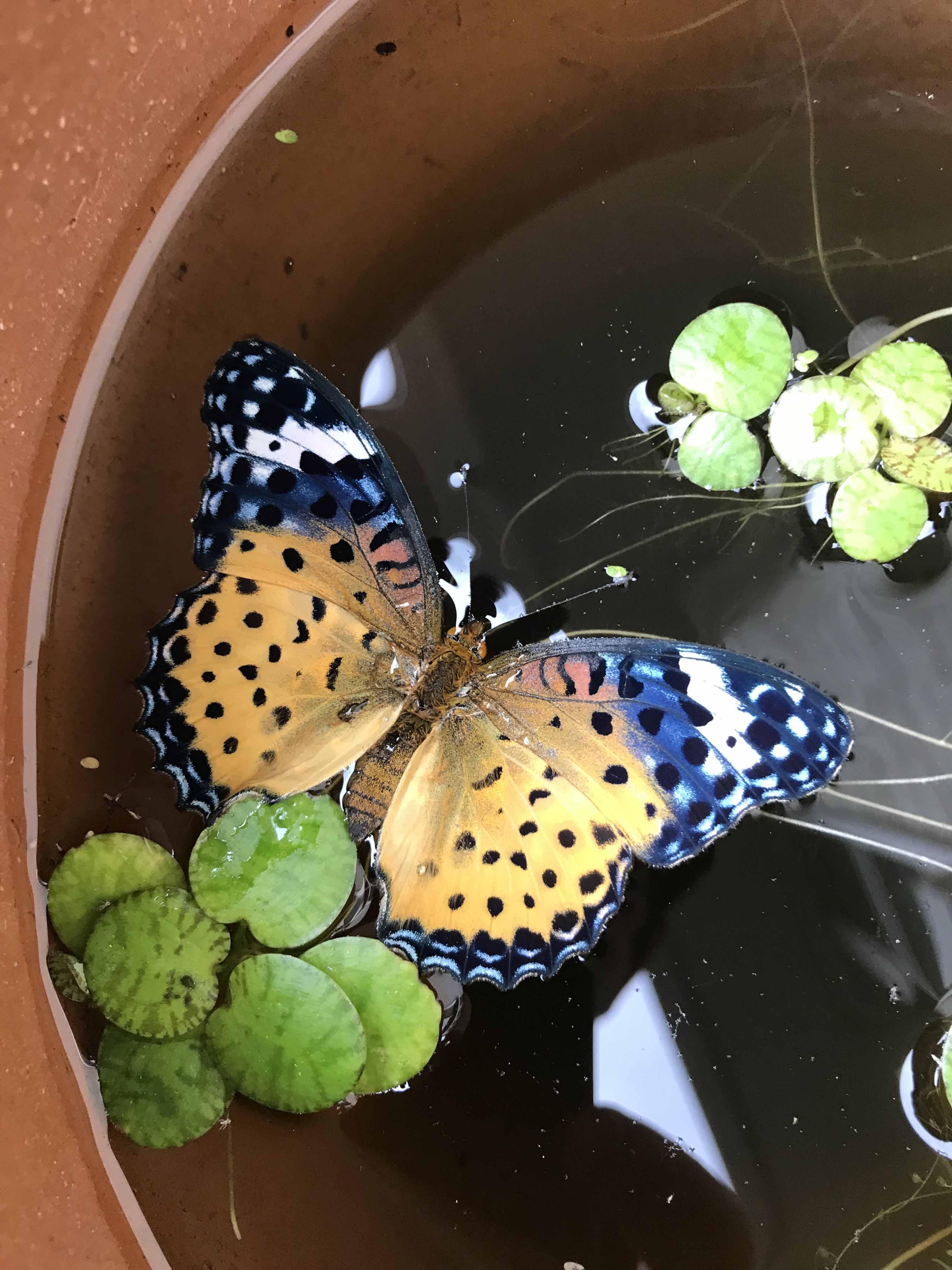 蝶が溺れてた!_a0026295_16341118.jpg