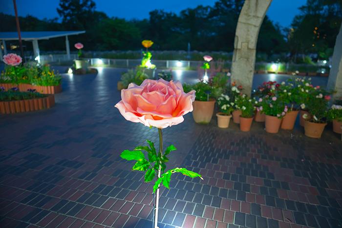 日比谷花壇大船フラワーセンター 夜のバラ園 『ナイトローズ』_b0145398_22134459.jpg