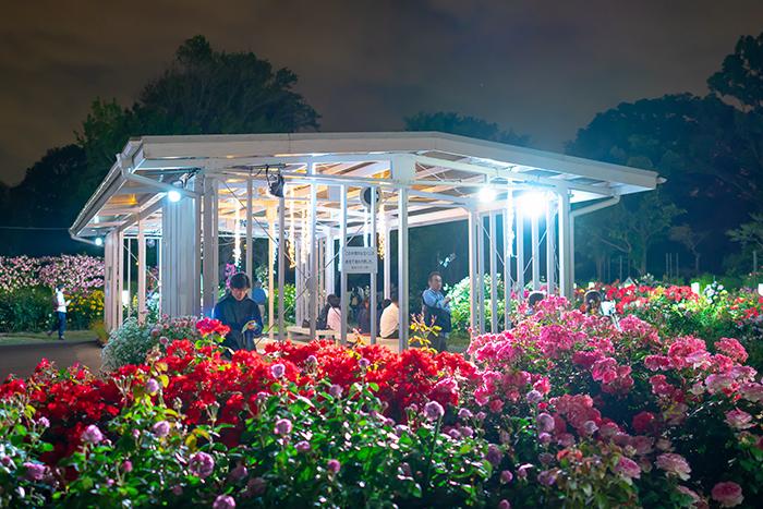 日比谷花壇大船フラワーセンター 夜のバラ園 『ナイトローズ』_b0145398_22484339.jpg