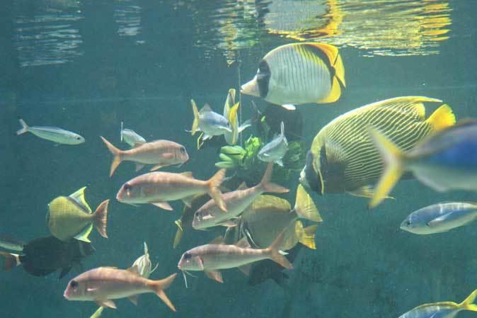 葛西臨海水族園:「小笠原の海4」②~小松菜を食べる魚たち、「友禅染」と「水」_b0355317_21413985.jpg