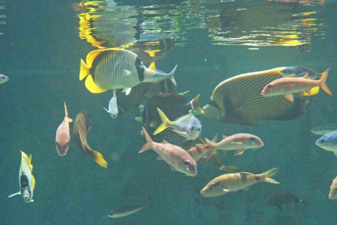 葛西臨海水族園:「小笠原の海4」②~小松菜を食べる魚たち、「友禅染」と「水」_b0355317_21503398.jpg