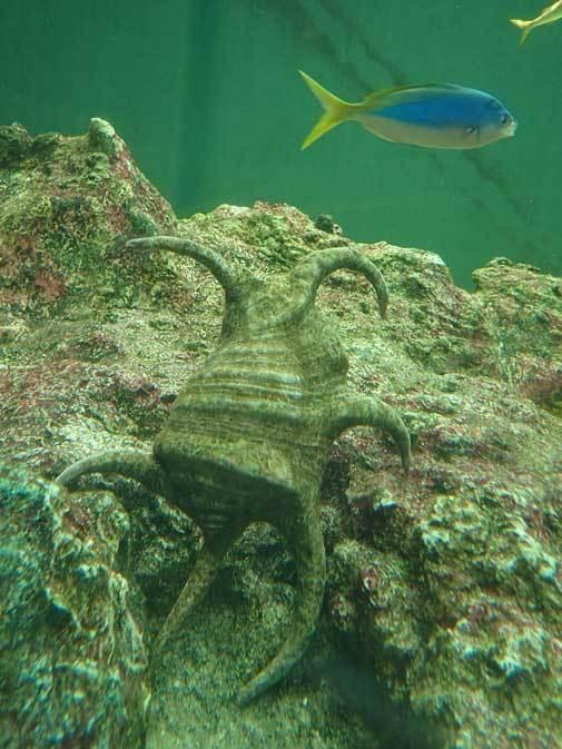 葛西臨海水族園:「小笠原の海4」②~小松菜を食べる魚たち、「友禅染」と「水」_b0355317_22125496.jpg