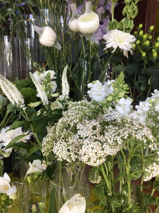花、花、花、虫、犬、橋、霧/ San Francisco Snapshots_e0310424_15372135.jpeg