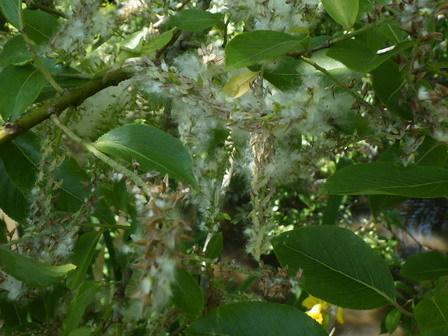 5月に夏日。上陸する生きもの。盛りの花。_a0123836_16494539.jpg