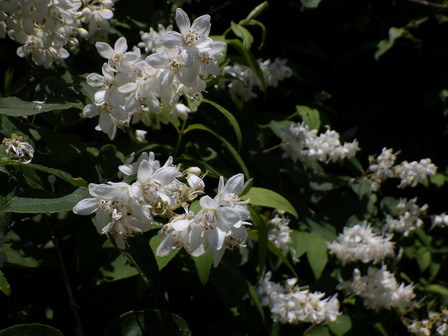 5月に夏日。上陸する生きもの。盛りの花。_a0123836_16495148.jpg