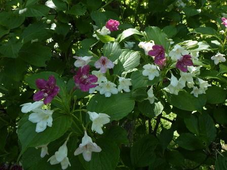 5月に夏日。上陸する生きもの。盛りの花。_a0123836_16500206.jpg