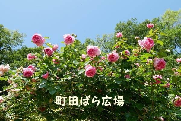 b0120541_22233130.jpg