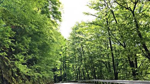 新緑のエネルギー!_e0248949_16411650.jpg